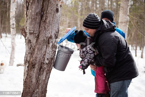 Maple Syrup industry time with father, daughter, brother looking maple water in the bucket Photo showing little girl looking maple water in the bucket for demonstration of the Local canadian industry of maple syrup in Quebec Canada.