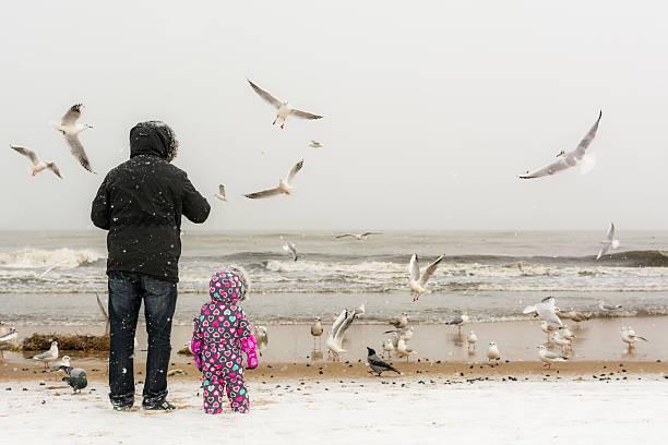 Father and daughter feeding seagulls at the beach picture id637912148?b=1&k=6&m=637912148&s=612x612&w=0&h=fvyylyvinsja0dmzagwzvi6v3 ikchinho7wj bnlnq=