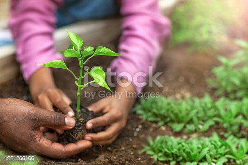 Father and daughter hands holding small seedling at community garden greenery