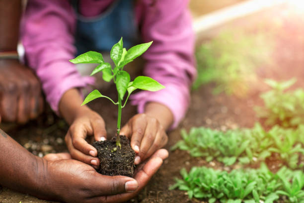 Father and daughter hands holding small seedling at plant nursery stock photo