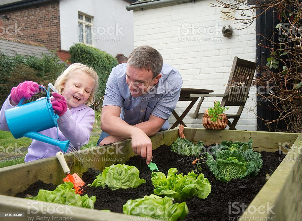 Father and daughter harvest royalty-free stock photo
