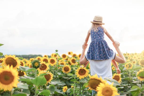 Father and daughter have fun in sunflowers field. Kid sits on daddy's shoulders on summer holiday. Child girl and man are family. stock photo