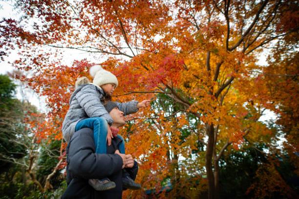 vader en dochter op zoek naar herfstbladeren met een schouder-auto - bos spelen stockfoto's en -beelden