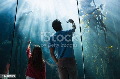 Father and daughter looking at fish tank at the aquarium