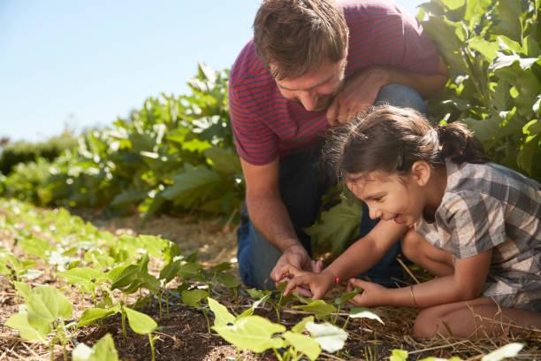 vater und tochter betrachtet man junge pflanzen wachsen auf zuteilung - gemeinschaftsgarten stock-fotos und bilder