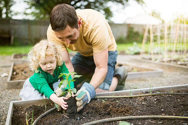 Father and Daughter Planting Garden stock photo
