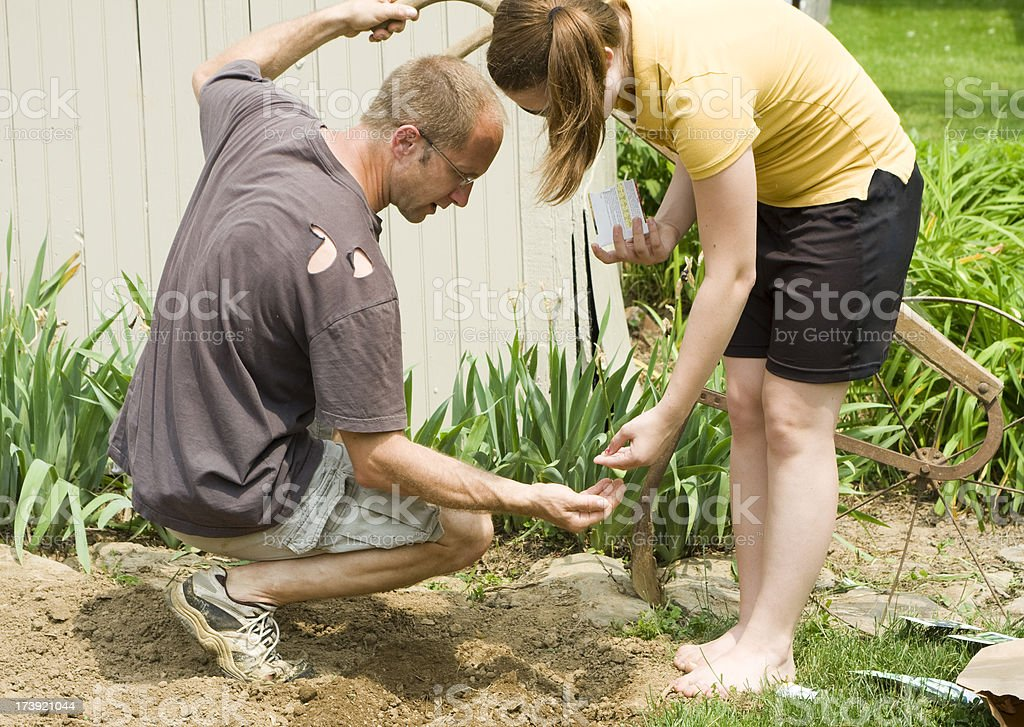 Father and Daughter Planting Seeds in the Garden stock photo