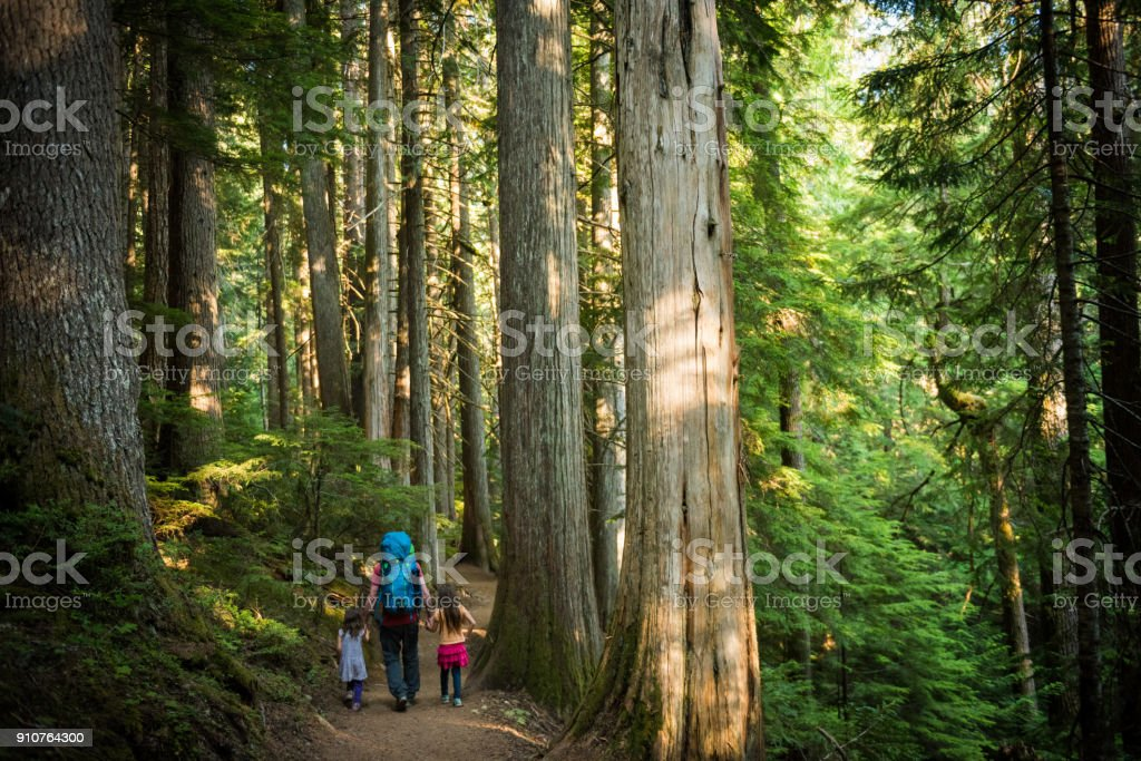 Father and daughters immersed in nature stock photo