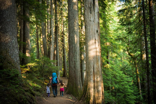 father and daughters immersed in nature - canada travel stock photos and pictures