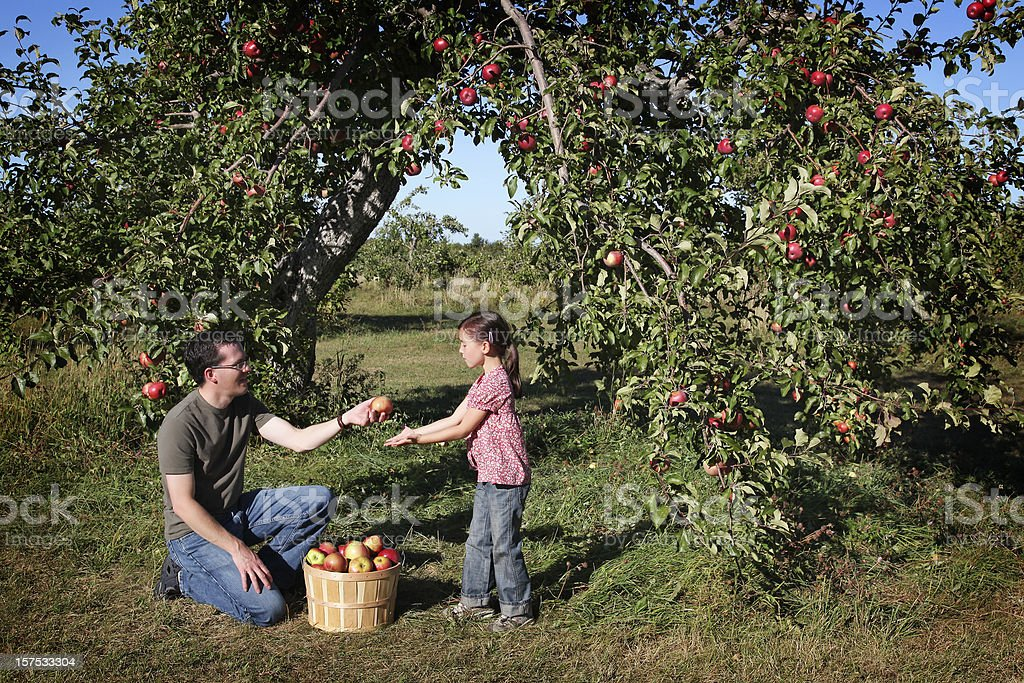 Father and daugther in an orchard royalty-free stock photo