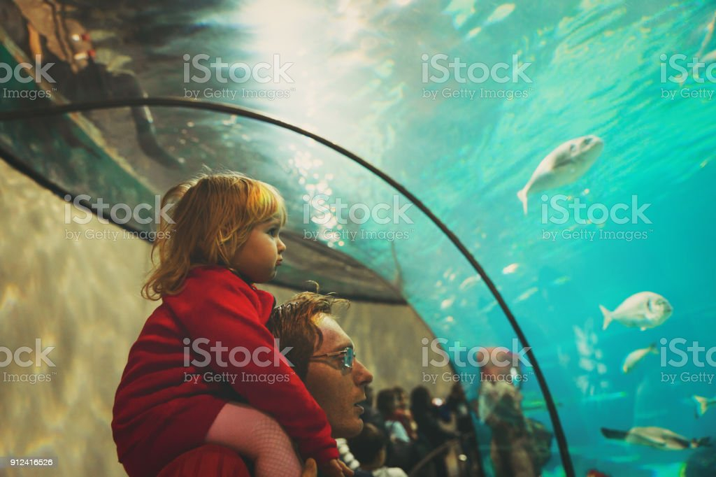 father and little daughter watching fishes in large aquarium stock photo
