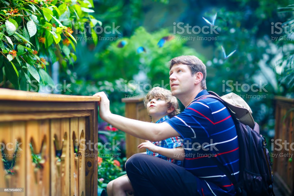 Father and preschool kid boy discovering flowers, plants and butterflies at botanic garden. stock photo