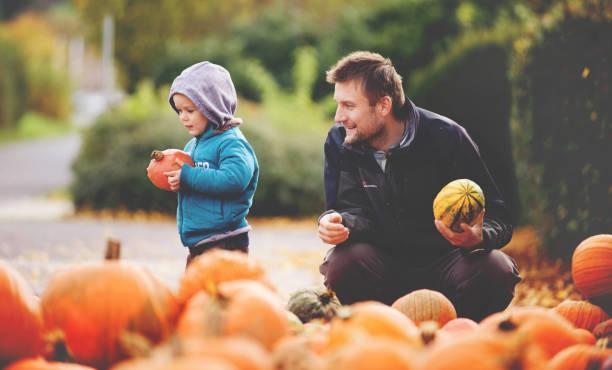 halloween-kürbisse sind auswahl, vater und sohn. - kürbis kaufen stock-fotos und bilder