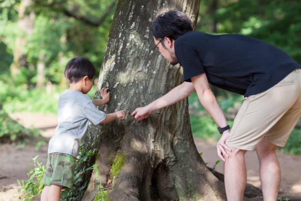 父と息子の探査 - 昆虫 ストックフォトと画像