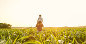 Father carrying his son on shoulders on corn field