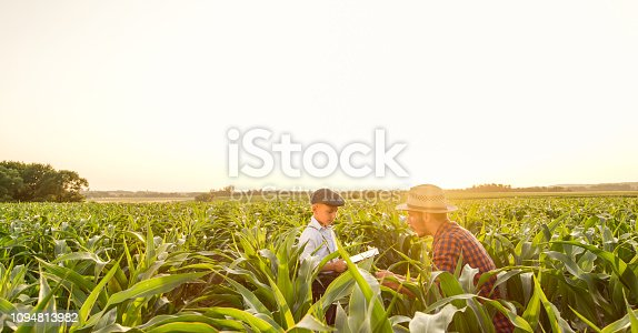 1094815168 istock photo Father and son on corn field 1094813982