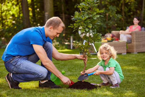 Father and son planting tree stock photo