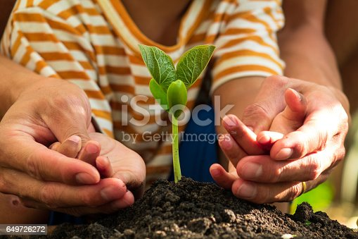 istock father and son planting young tree 649726272