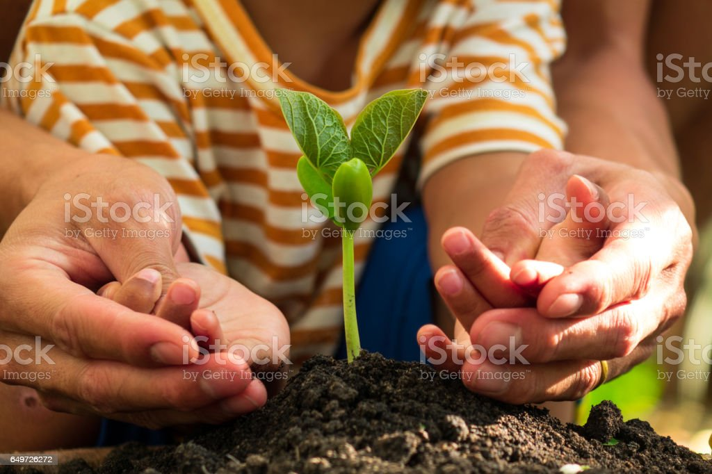 father and son planting young tree stock photo