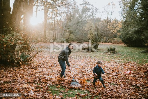 A dad and his boy rake up a pile of maple leaves, either doing some yard work chores or preparing jump into them.  A beautiful sunny autumn day in Washington, United States.