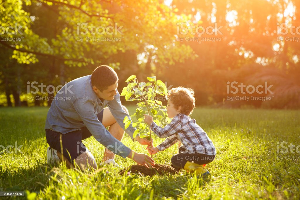 Father and son setting plant stock photo