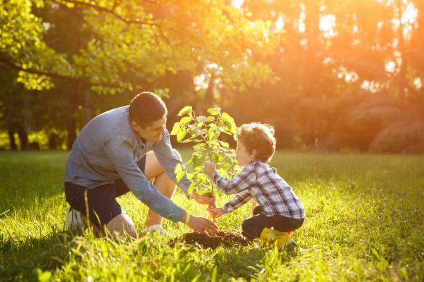 father and son setting plant - piantare foto e immagini stock