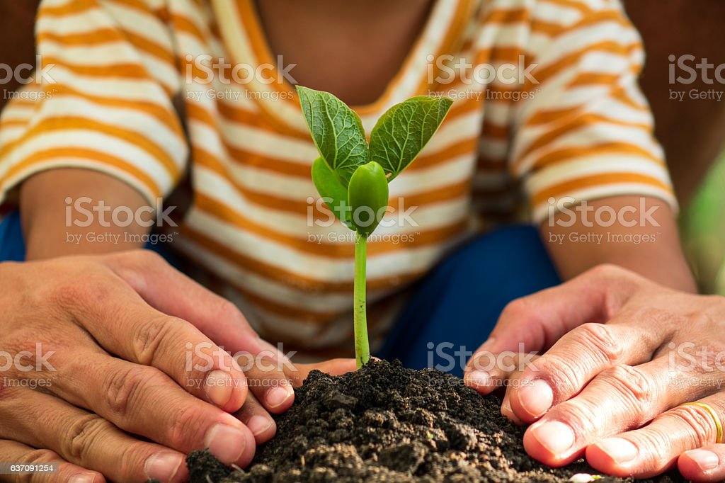 father and son take care young tree stock photo