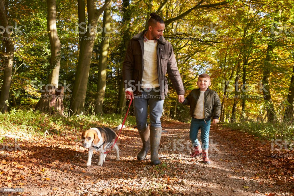 Father And Son Walking Dog In Autumn Woodland Together stock photo
