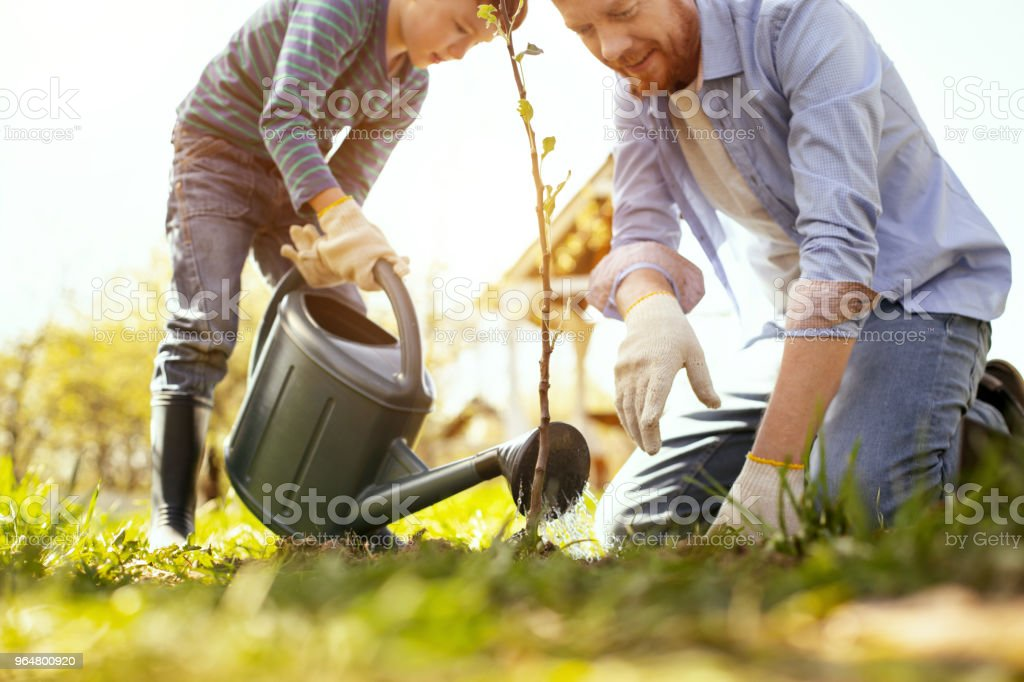 Father and son watering the tree royalty-free stock photo