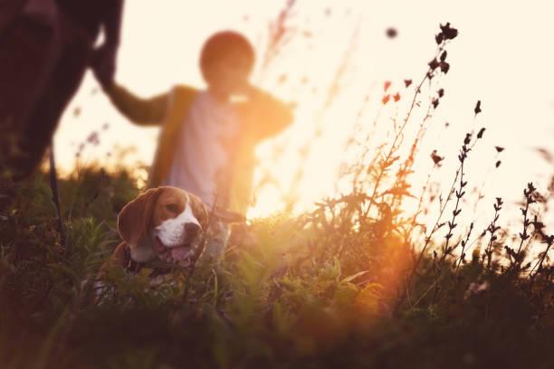 Vater und Sohn mit einem Beagle auf dem Feld bei Sonnenuntergang – Foto