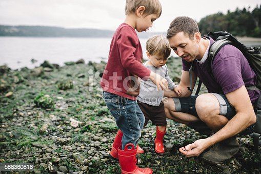 A dad and his two boys have fun discovering the wonders of a Pacific Northwest beach on the Puget Sound in Washington state, the father helping them catch small crabs hiding under the rocks. The beach is covered with seaweed, rocks, and shells.  A depiction of available fathers involved in their children's lives.