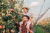 Happy young girl sitting on her father's shoulders when picking apples