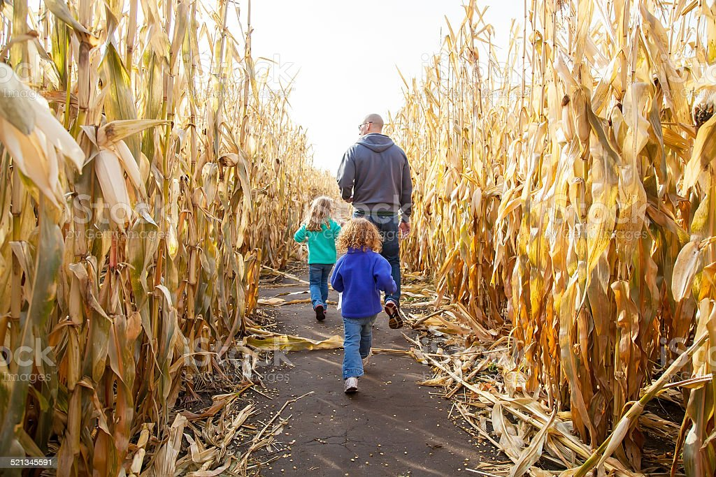 Father & Daughters In Corn Maze stock photo