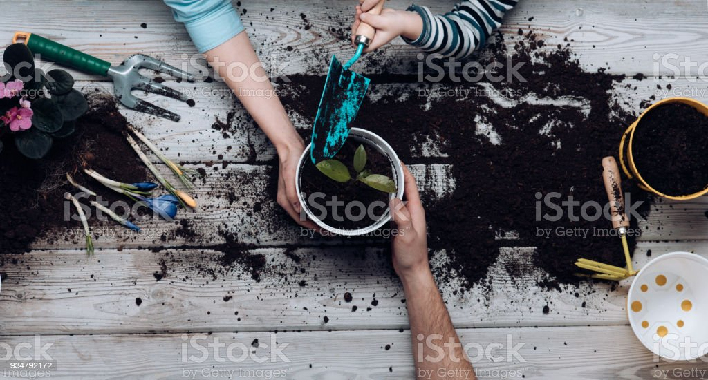 Father, mother and baby put flower together. Hobbies for whole family. Happy family at home cares for flowers. Spring and nature in house. Experience and busy weekend. Idea for a weekend stock photo