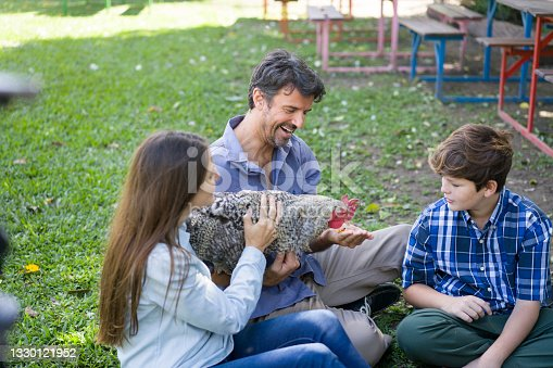 Father, mother and son caressing hen at backyard of agroecological farm