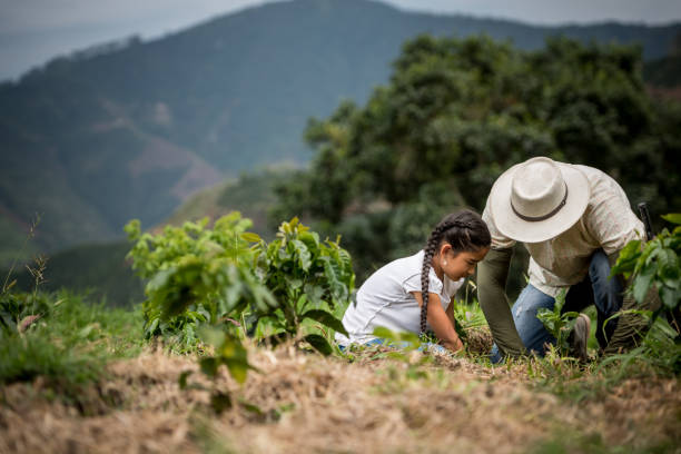 father planting a tree with his daughter at the farm - coffee farmer foto e immagini stock