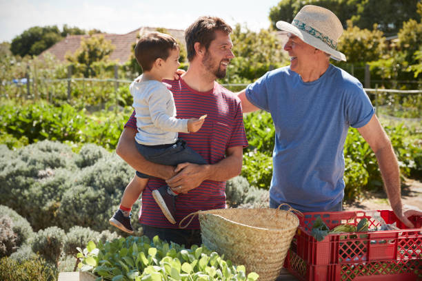 Father With Adult Son And Grandson Working On Allotment stock photo