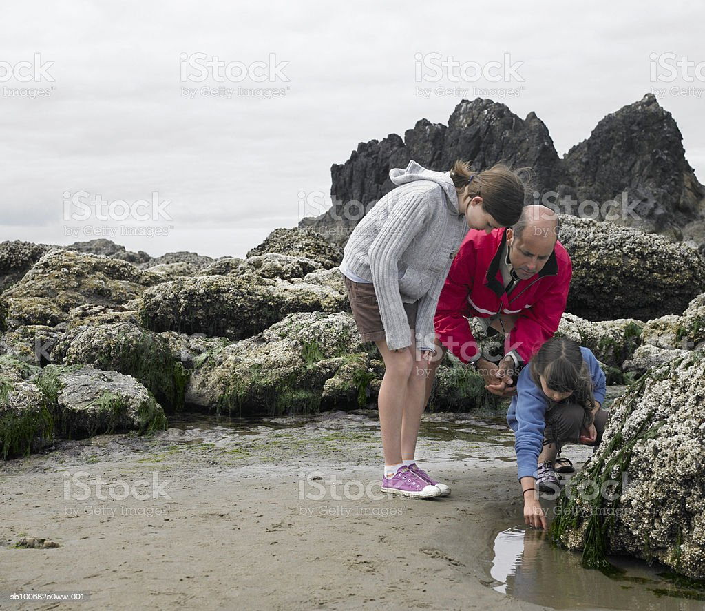 Father with children (8-13) searching tide pool on beach royalty-free stock photo