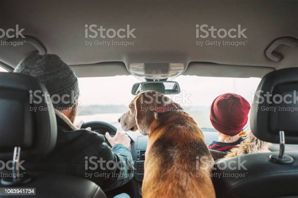 Father with son and beagle dog traveling together by auto rear seats picture id1063941734?b=1&k=6&m=1063941734&s=612x612&h=hda5184lke4atfd9rc9ykgfnaubyu96vbne uyr1s7y=