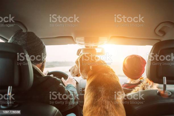 Father with son and beagle dog traveling together by auto rear seats picture id1091728338?b=1&k=6&m=1091728338&s=612x612&h=aviqt2jaoeysg95jvtxhf2cq4ntik87uy9x2v2t664w=