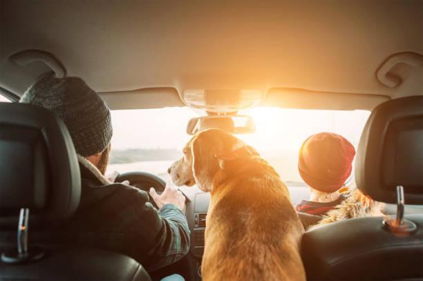 Vater mit Sohn und Beagle Hund reisen zusammen mit dem Auto Rücksitze Weitwinkel schießen – Foto