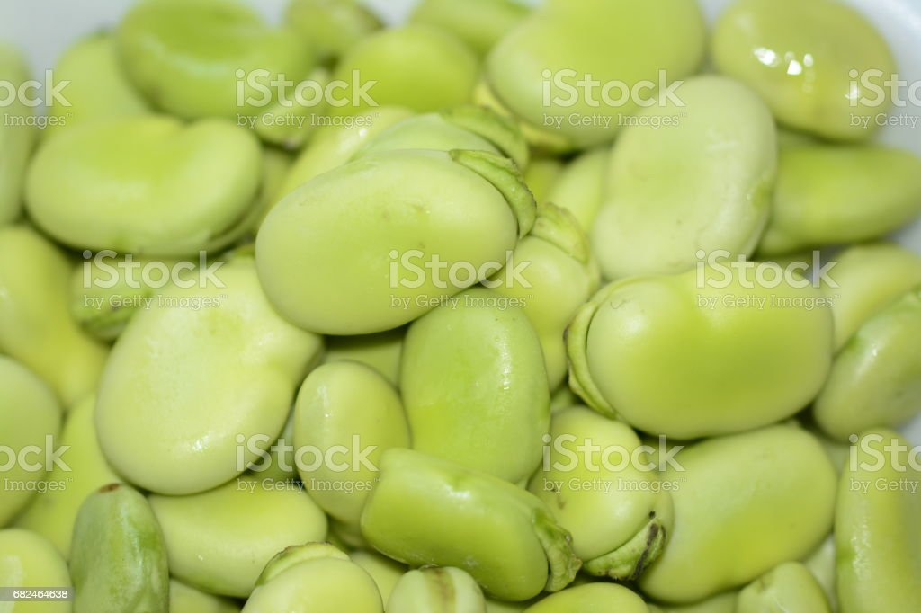 Fava bean stock photo