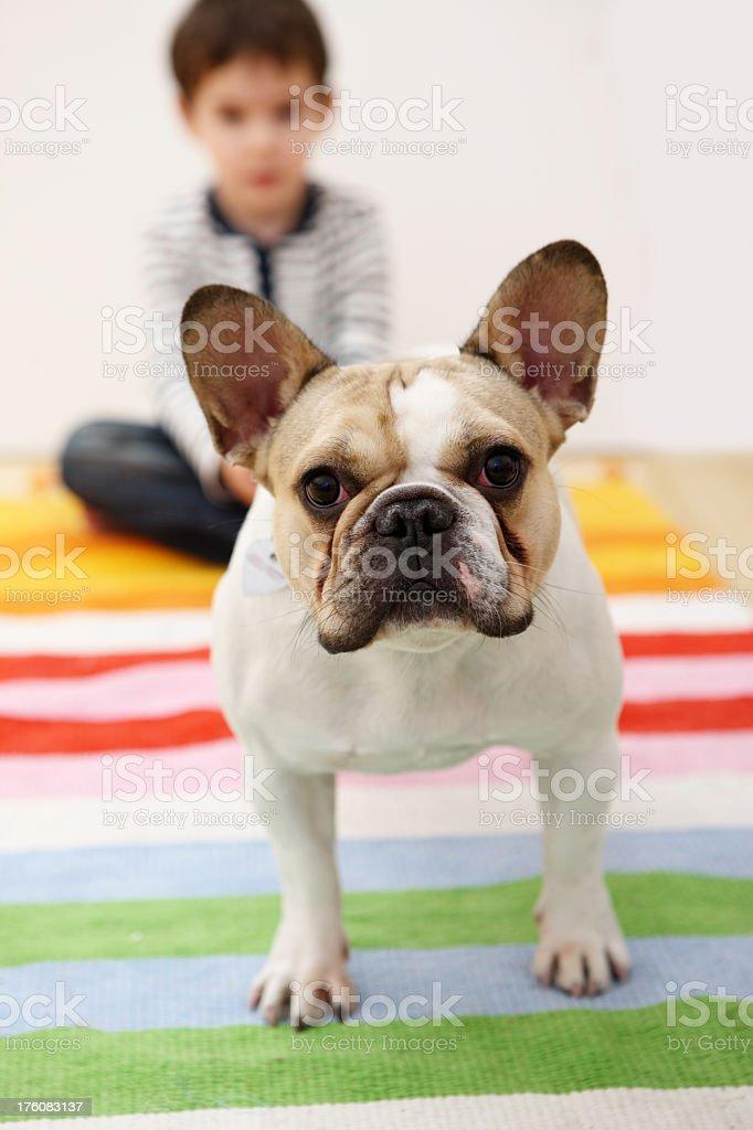 Favorite pet royalty-free stock photo