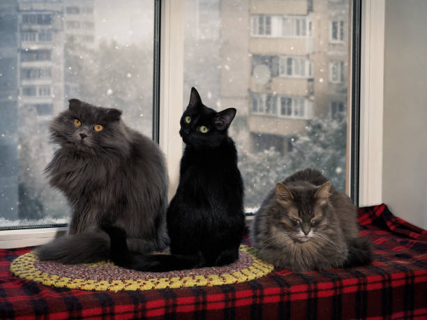 Favorite place of cats in the house window sill picture id929952570?b=1&k=6&m=929952570&s=612x612&w=0&h=f6tbve3aktlp1zw8jqt8fd6hjkjk4lpmkcbx5jdqoti=