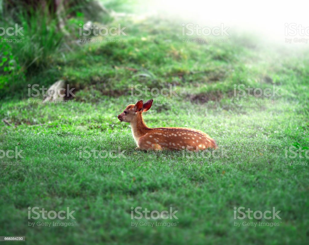 Fawn nestled in the Woods stock photo