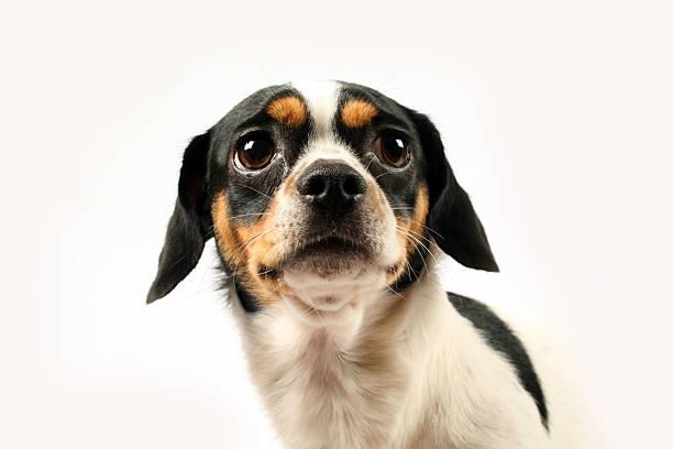 trauriger hund - hundeaugen stock-fotos und bilder