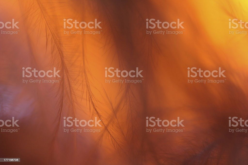Fearher royalty-free stock photo