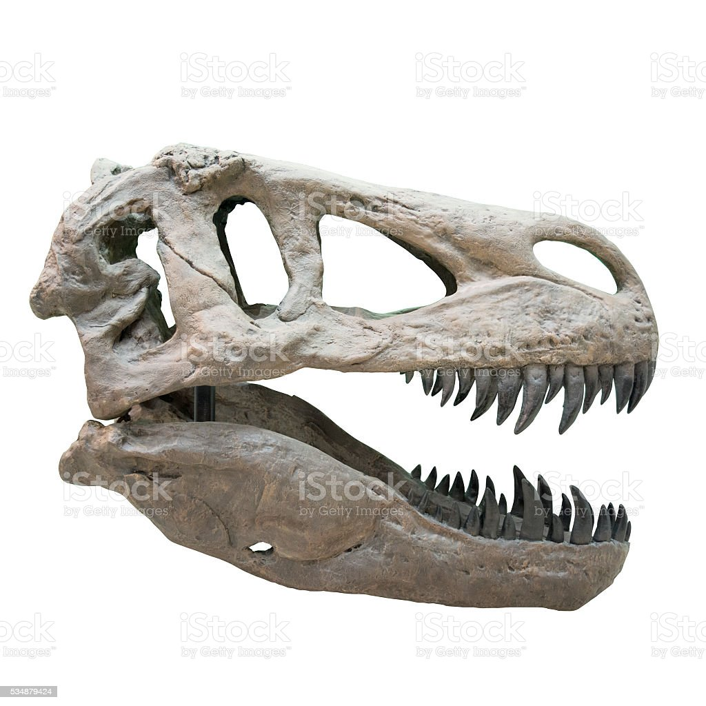 Fearsome carnivore dinosaur Tyrannosaurus Rex. Isolated on white stock photo
