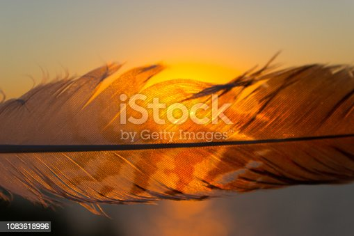 istock feather against sunset sky background 1083618996