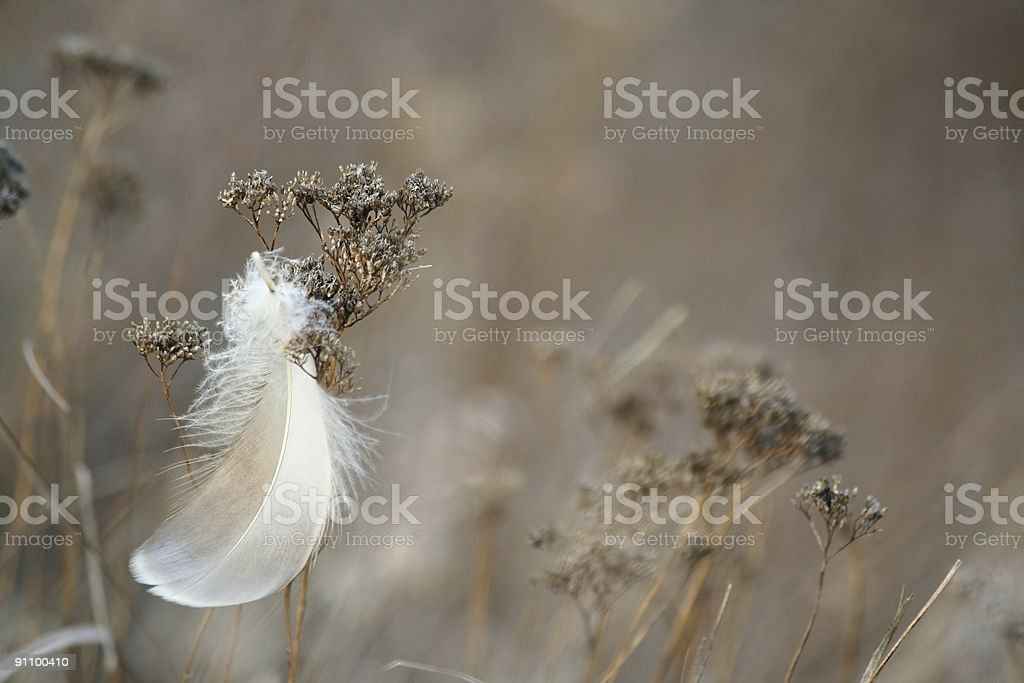 Feather and grass. royalty-free stock photo